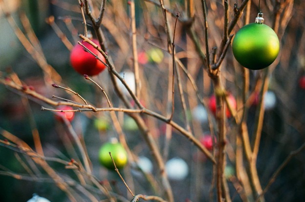 A lilac bush has green Christmas ornaments hanging on its branches in a city garden.