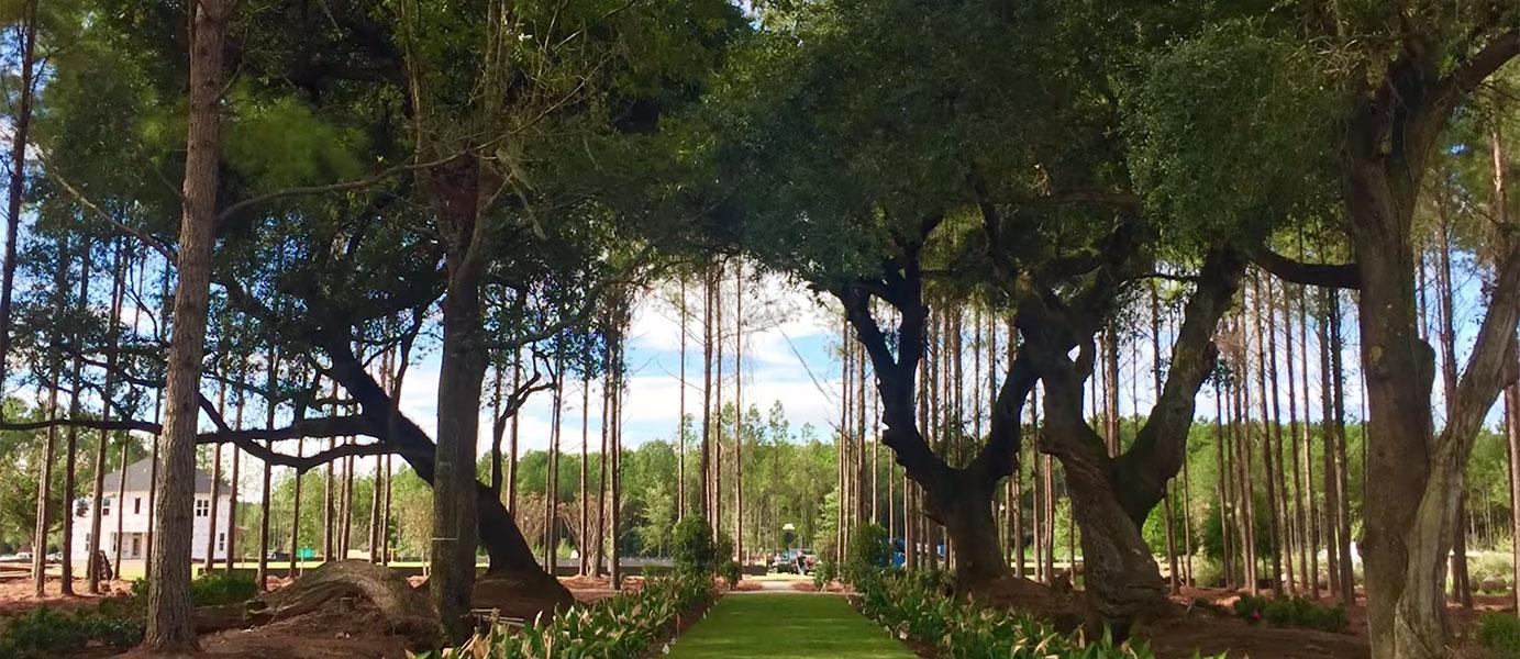 parks_gardens_video_image