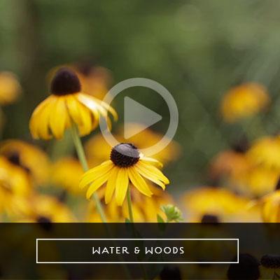 water-woods-video